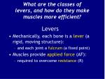 what are the classes of levers and how do they make muscles more efficient