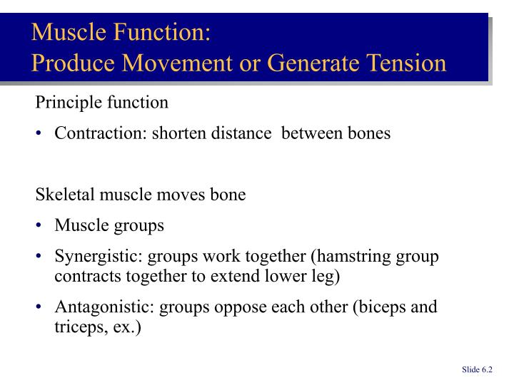 Muscle function produce movement or generate tension
