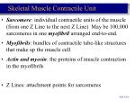 skeletal muscle contractile unit