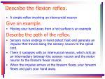 describe the flexion reflex