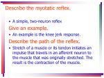 describe the myotatic reflex