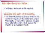 describe the spinal reflex