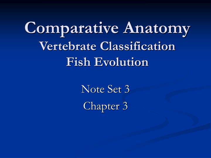 PPT - Comparative Anatomy Vertebrate Classification Fish Evolution ...