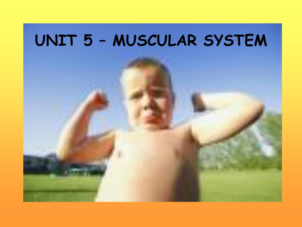 unit 5 muscular system l.