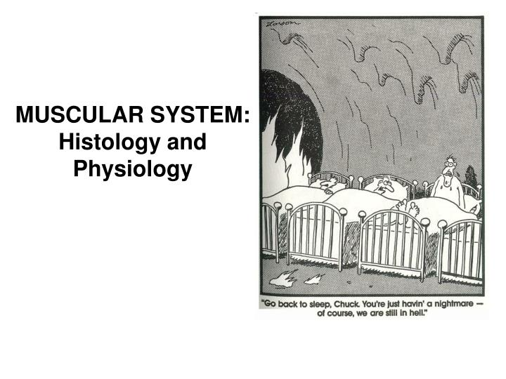 muscular system histology and physiology n.