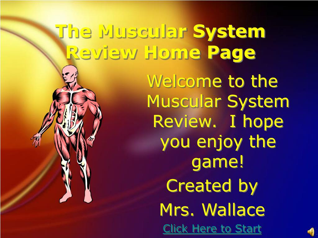 the muscular system review home page l.