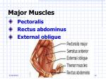 major muscles12