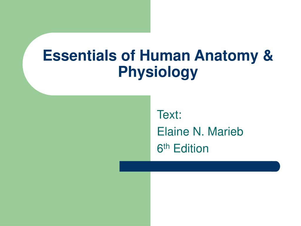 essentials of human anatomy physiology l.