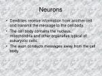 neurons5