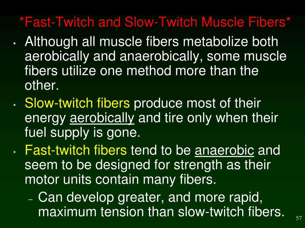 twitch muscle fibers