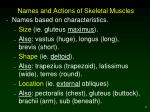 names and actions of skeletal muscles