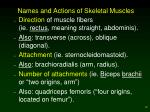names and actions of skeletal muscles12