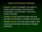 types and functions of muscles
