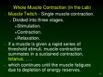 whole muscle contraction in the lab