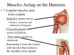 muscles acting on the humerus44