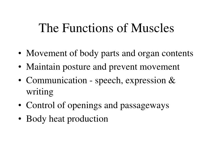 Ppt Chapter 11 The Muscular System Powerpoint Presentation Id58812