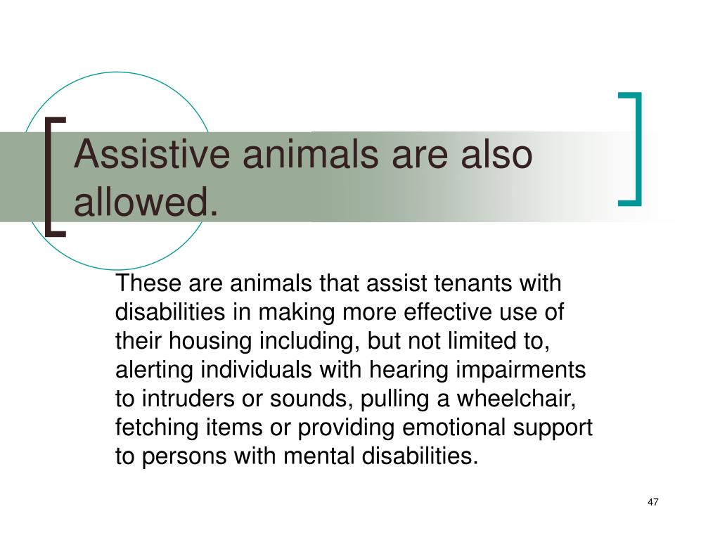 Assistive animals are also allowed.