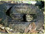 cottonmouth snake animal report by j r