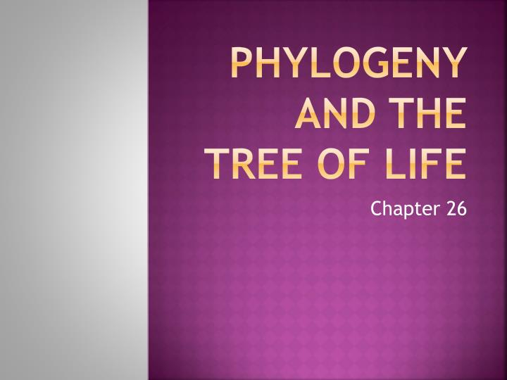 Phylogeny and the tree of life