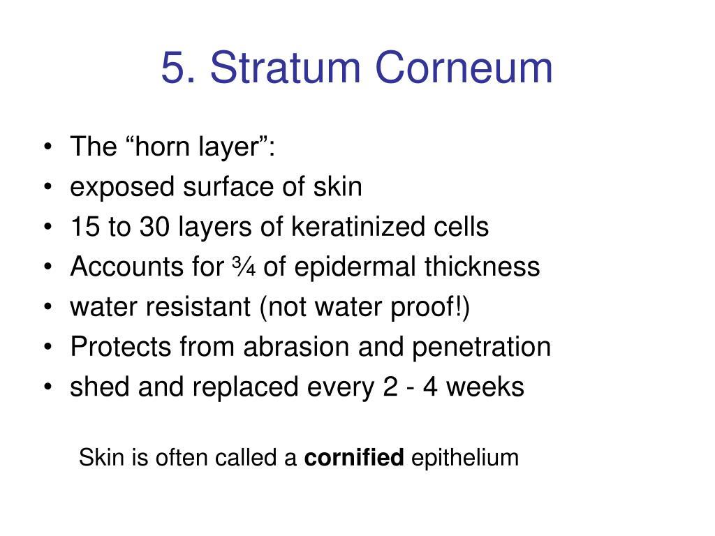 5. Stratum Corneum