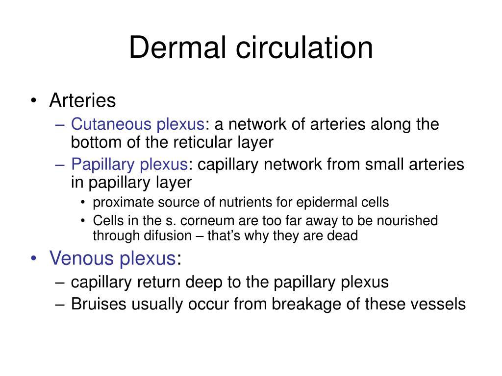 Dermal circulation