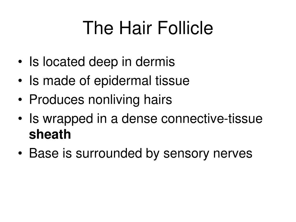 The Hair Follicle