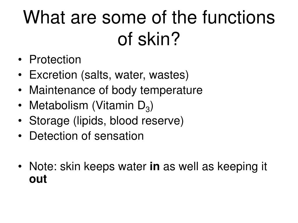 What are some of the functions of skin?