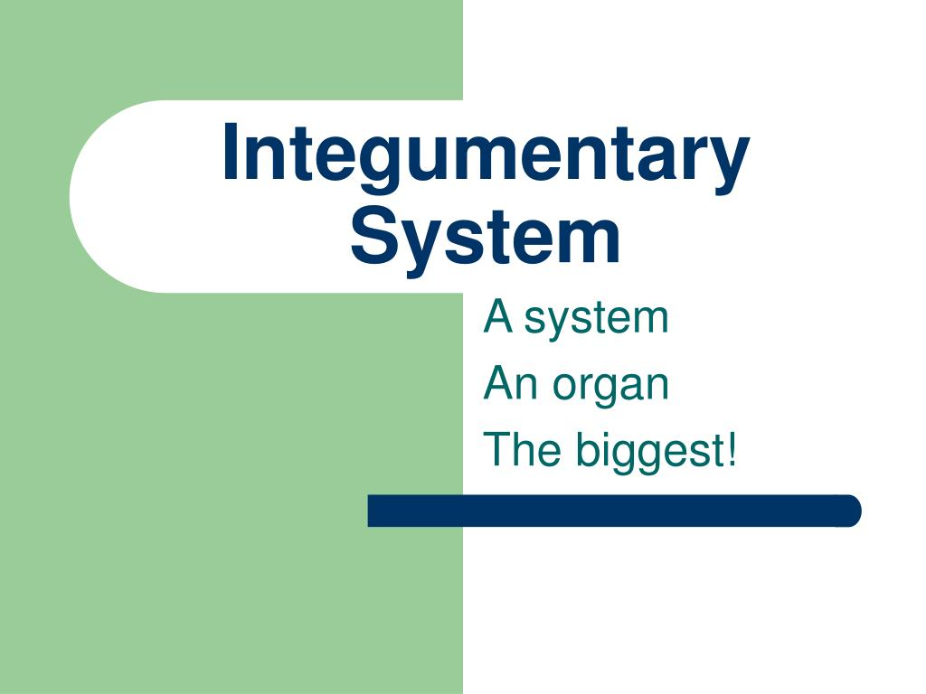 integumentary system l.