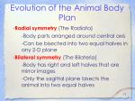evolution of the animal body plan12
