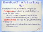 evolution of the animal body plan22