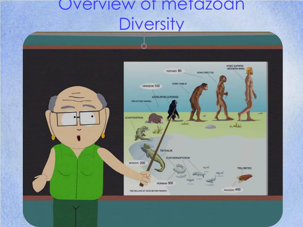 overview of metazoan diversity l.