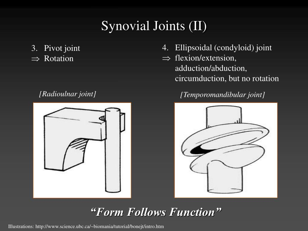 Synovial Joints (II)
