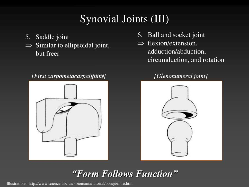 Synovial Joints (III)