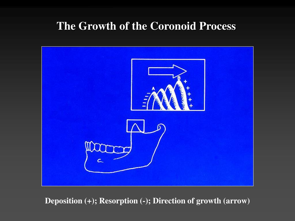 The Growth of the Coronoid Process