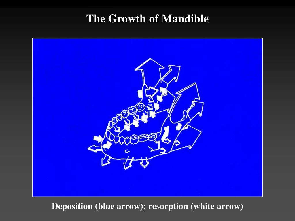 The Growth of Mandible