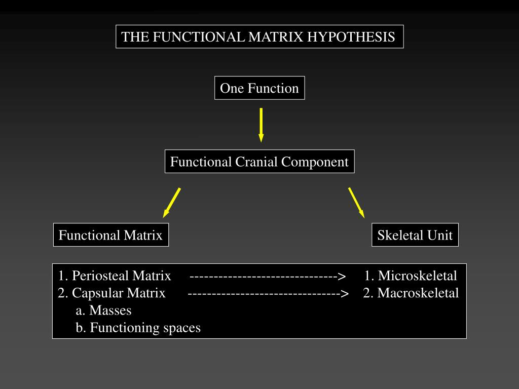 THE FUNCTIONAL MATRIX HYPOTHESIS