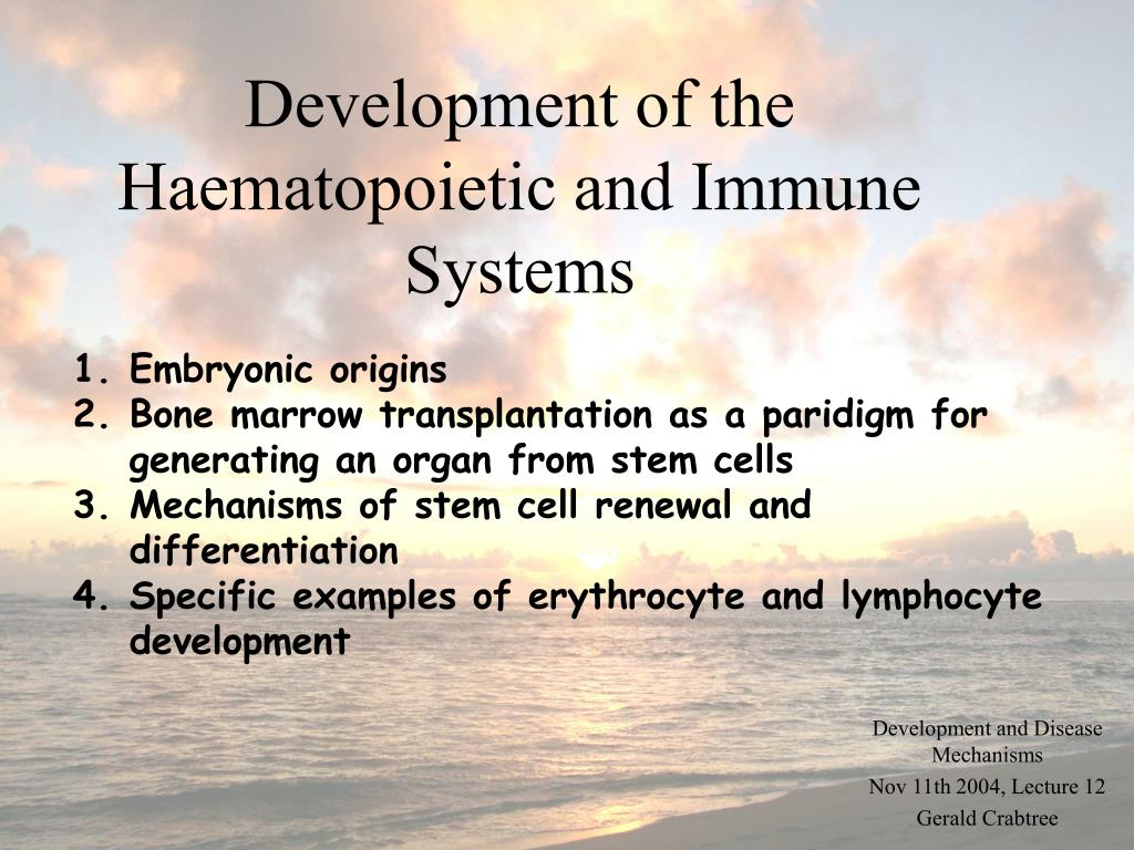 development of the haematopoietic and immune systems l.