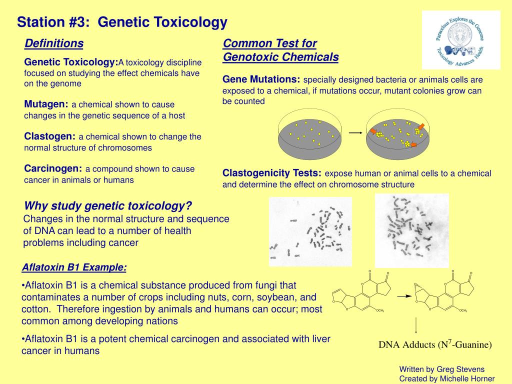 PPT - Station #3: Genetic Toxicology PowerPoint Presentation