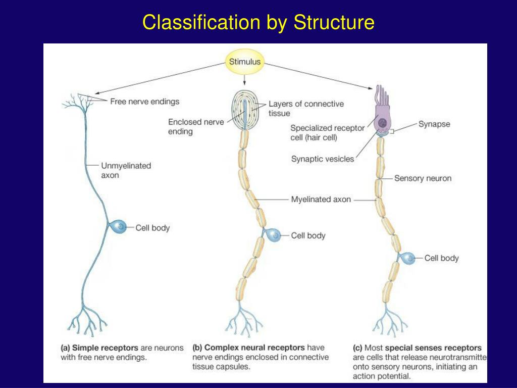 Classification by Structure