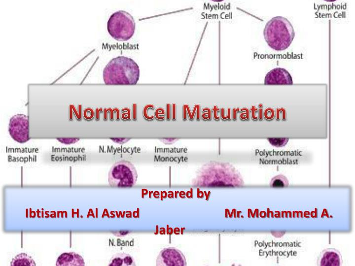 normal cell maturation n.