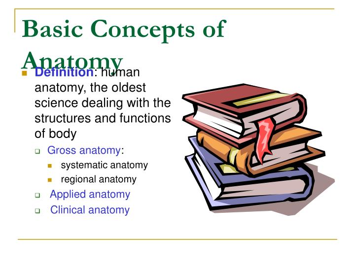 Ppt Human Anatomy Powerpoint Presentation Id591846