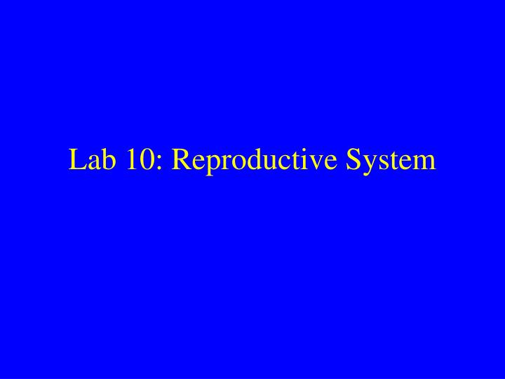 lab 10 reproductive system n.