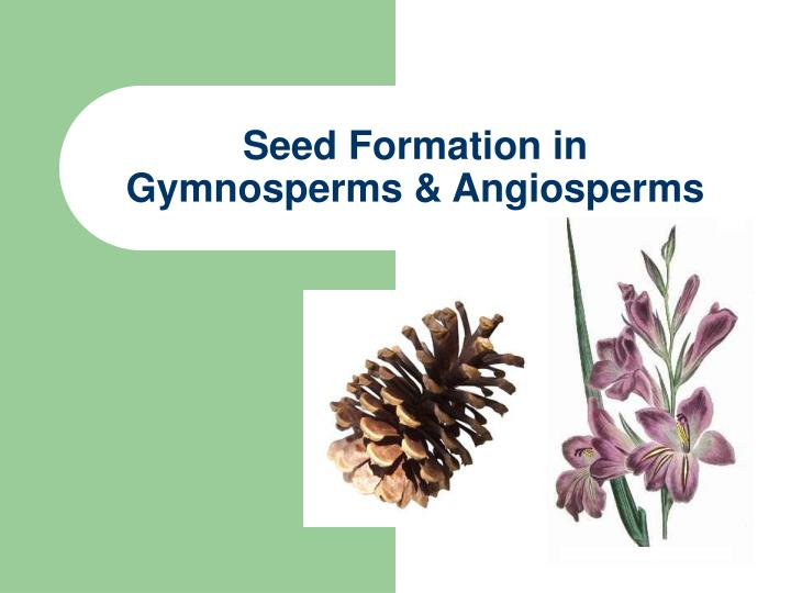 seed formation in gymnosperms angiosperms n.