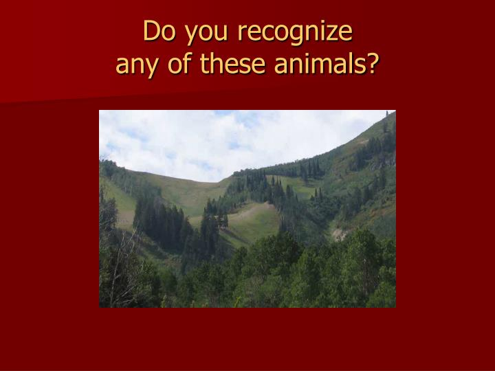 Do you recognize any of these animals