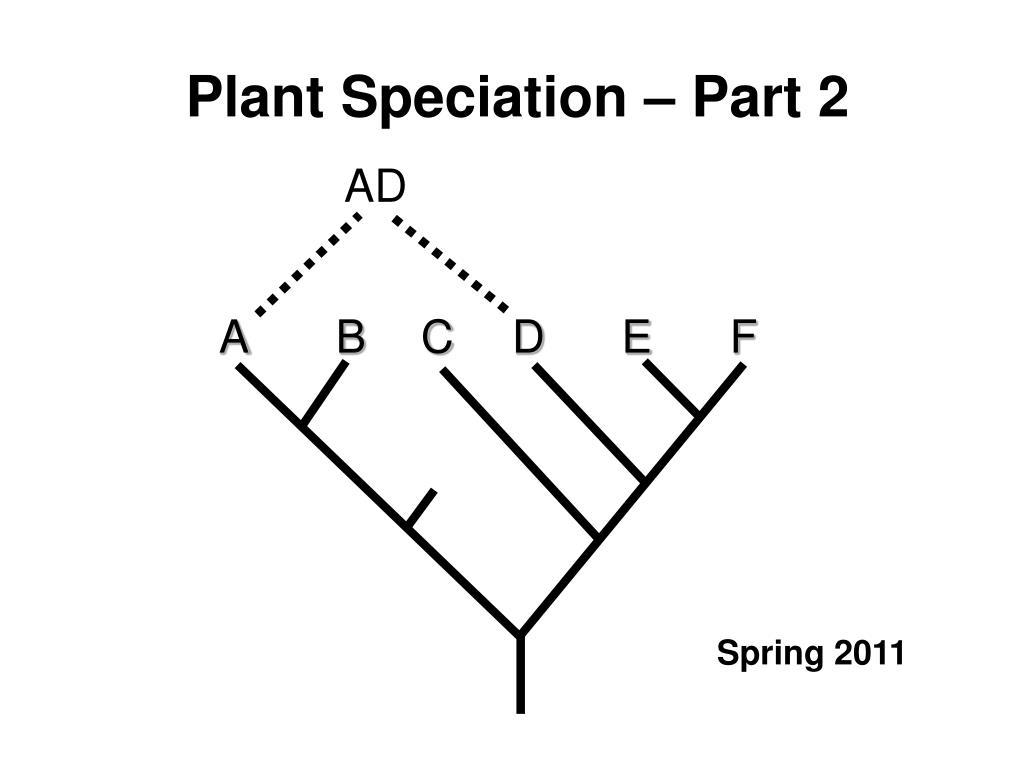 plant speciation part 2 l.