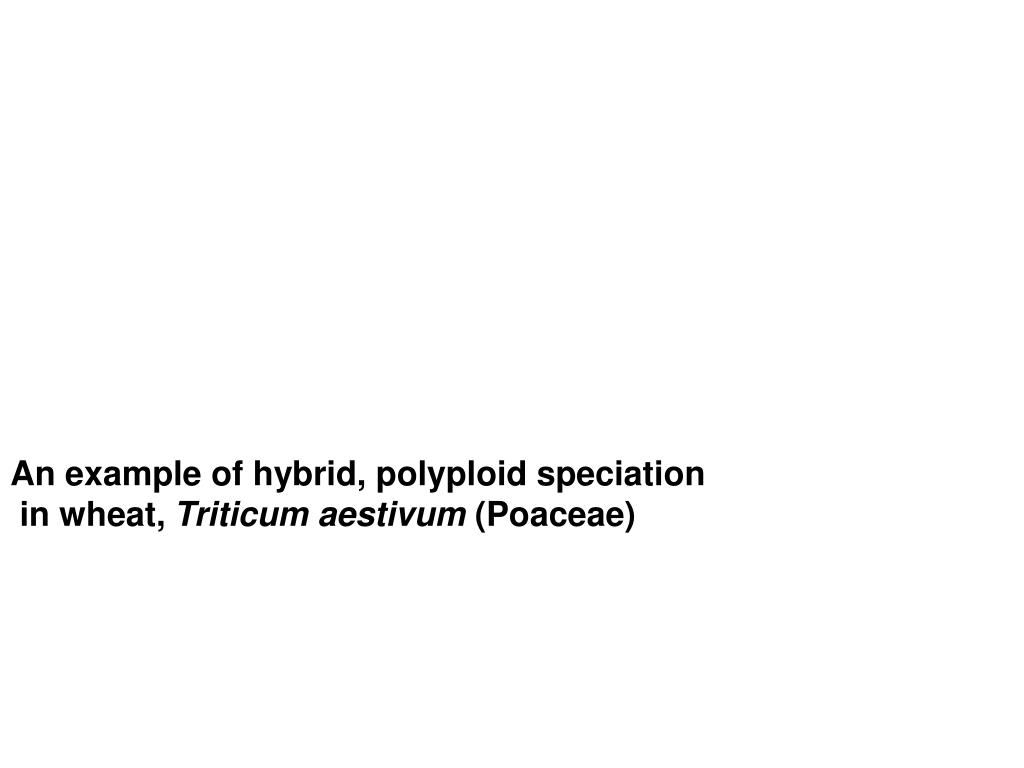 An example of hybrid, polyploid speciation