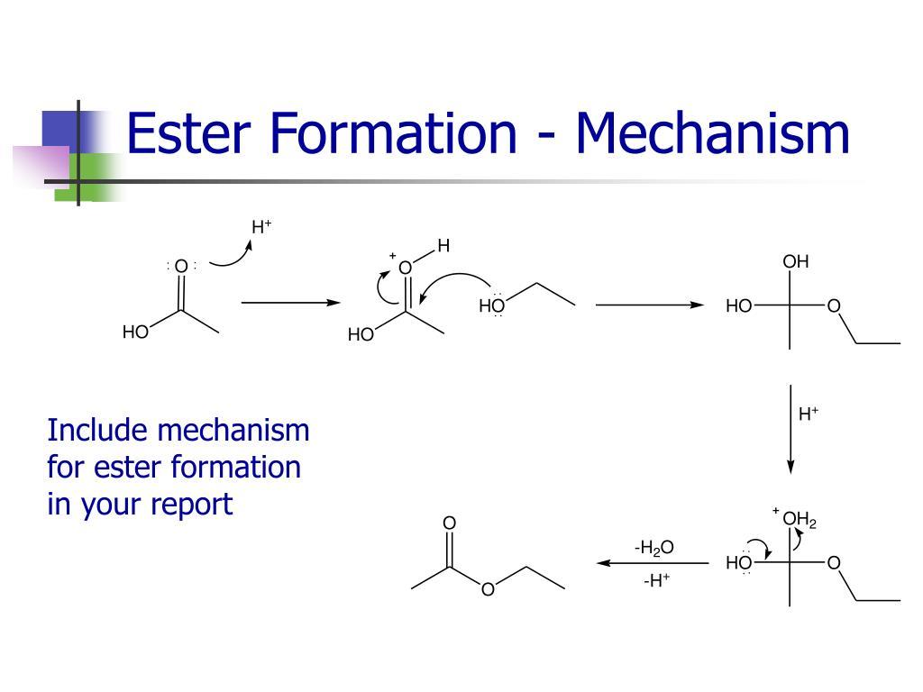 Ester Formation - Mechanism