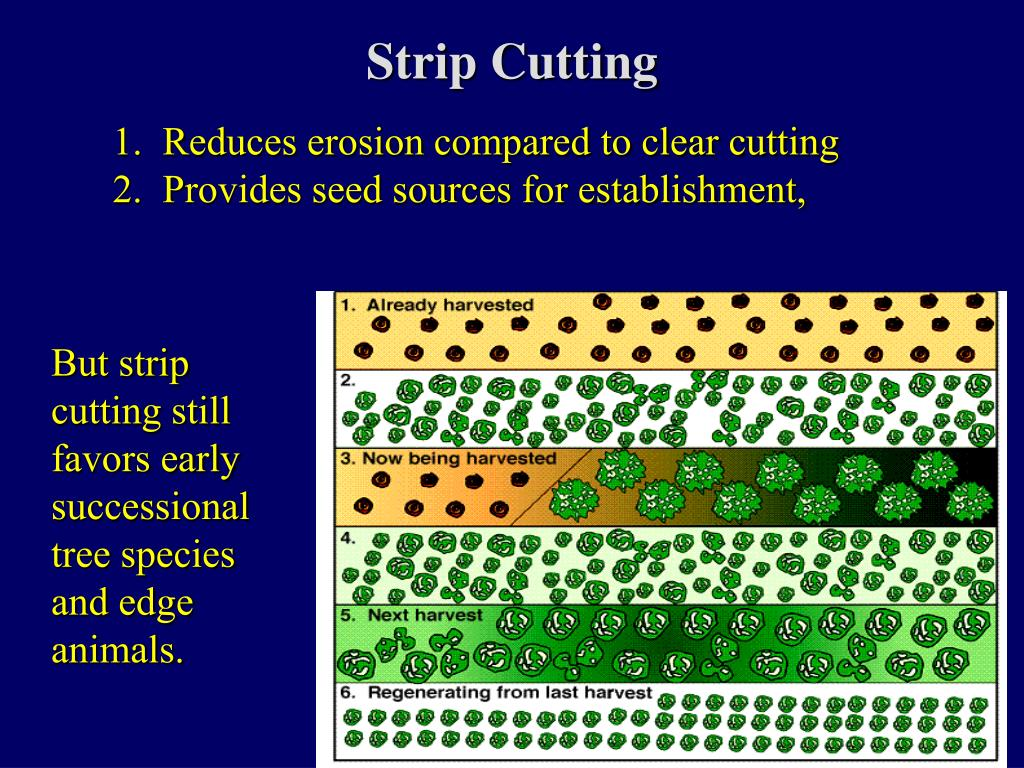 Strip Cutting