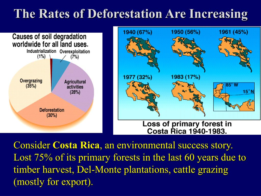 The Rates of Deforestation Are Increasing