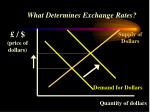 what determines exchange rates22